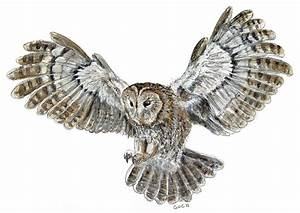 Flying Owl Drawing Tumblr | www.imgkid.com - The Image Kid ...