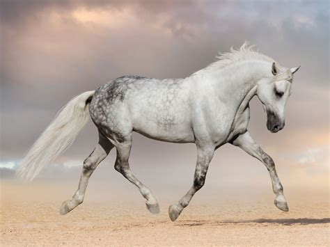 horse symbolism spirit animals wild animal horses mammals gratitude