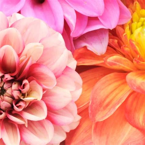 flower color types of flowers for weddings bloomsbythebox