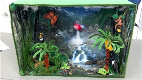 Tropical Ecosystem  Rainforest Ecosystem Education
