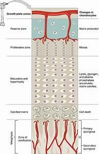 Rickets  Osteomalacia   U2014 Symptoms And Treatment