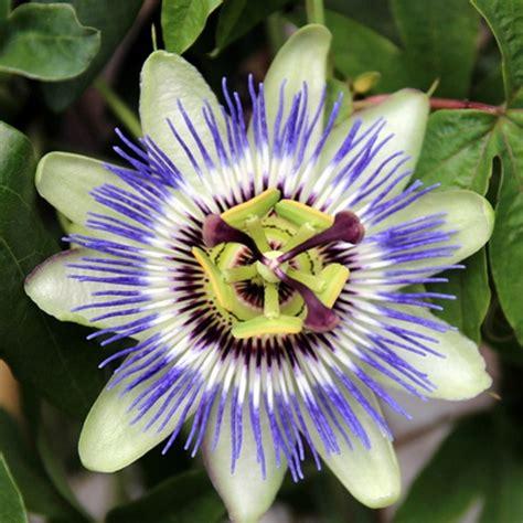 alle verschillende bloemen bedankjes nu communie plantjes in groene bedankjes voor