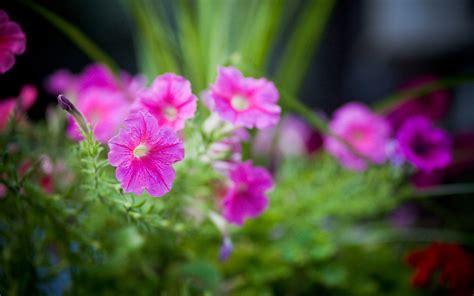 May Flowers Desktop Wallpaper Wallpapersafari