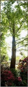 Bild Hochkant Format : hochkant panorama bild foto von boah ey aus einzelb ume fotografie 5188931 fotocommunity ~ Orissabook.com Haus und Dekorationen