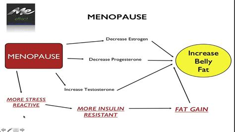 menopause belly       beat  youtube