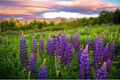 Purple Flowers A19 Desktop Wallpapers 4k