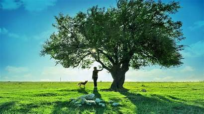 Trees Wallpapers Tree Huge Nature Amazing