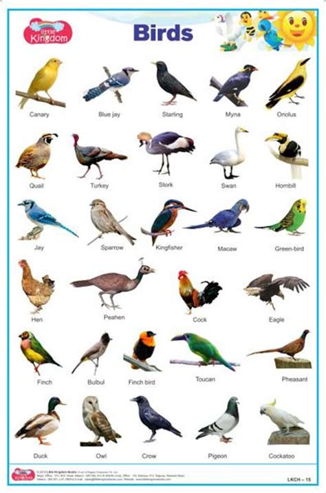 birds pictures for kids with names