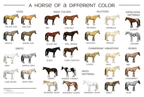 horse colors poster colours horses breeds guide chart markings fantasy deviantart basic different types colour coloring honour grand national today
