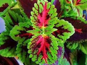 Pflegeleichte Zimmerpflanzen Mit Blüten : zimmerpflanzen foto bild pflanzen pilze flechten bl ten kleinpflanzen natur bilder ~ Sanjose-hotels-ca.com Haus und Dekorationen