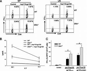 Cd204 Suppresses Large Heat Shock Protein