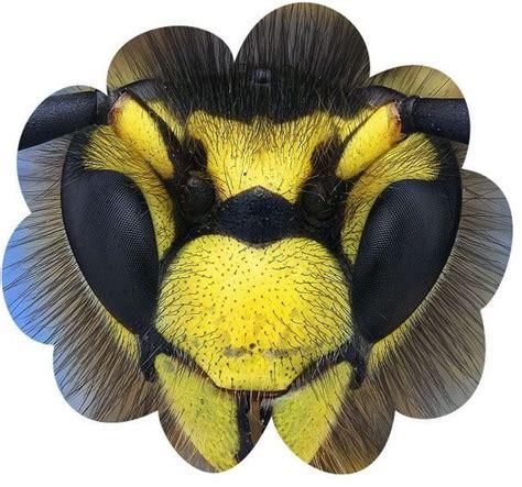 wasp medicine  totem crystal wind animal spirit