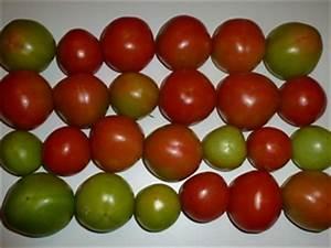 Grüne Tomaten Nachreifen : tomaten nachreifen lassen pflanzenkosmos ~ Lizthompson.info Haus und Dekorationen