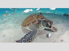 Playa Lagun Turtle Beach Curacao – Curacao To Go Travelguide