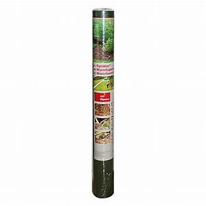 Niedrig Wachsende Hecke : bambus pflanzen kaufen preisvergleiche ~ Lizthompson.info Haus und Dekorationen