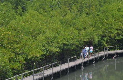 ekowisata hutan bakau dikembangkan  penajam indonesia