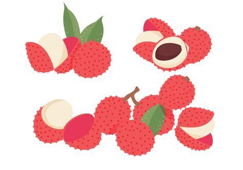 lychee fruit drawing lychee vectors download free vector art stock graphics