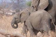 Tanzania Wildlife Animals