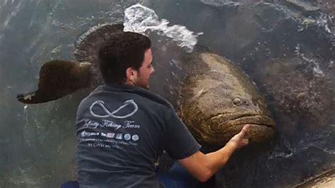 grouper goliath giant fishing bridge