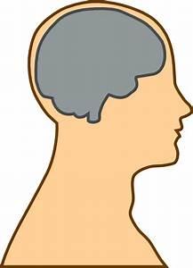 Medical Diagram Of Brain Clip Art Free Vector In Open