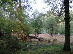 File:Epping Forest 2.JPG - Wikimedia Commons