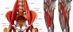 Throbbing Hip Pain Causes  U2013 The Hip Flexor