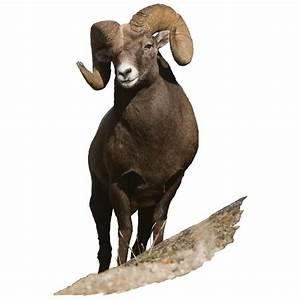Big Horn Sheep Indoor Wall Graphic - 228920, Decorative