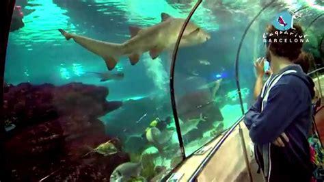 l aquarium de barcelona 2014