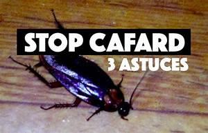 Cafard De Jardin Comment S En Débarrasser : 3 moyens pour se d barrasser des cafards dans la maison ~ Dallasstarsshop.com Idées de Décoration