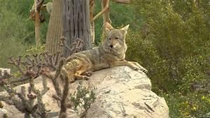 2013  2014 Arizona Wildlife Views - Show 7