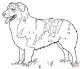 Shepherd Australian Coloring Drawing Printable Colorings Paper sketch template