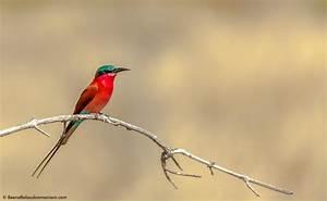 AFRICAN BIRD - Beena Balasubramaniam  Bird