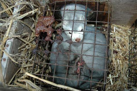 fur farming animal welfare problems