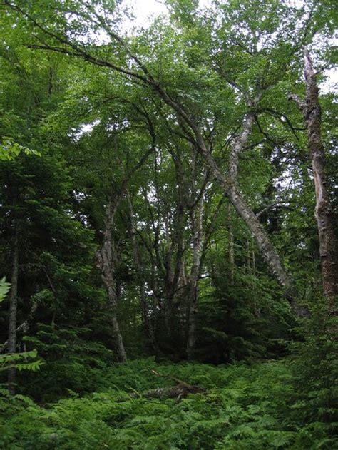best forests in america 57 best images about north american forests on pinterest trees parks and image search