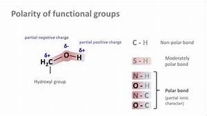 Biochemistry 2 1  Bond Polarity