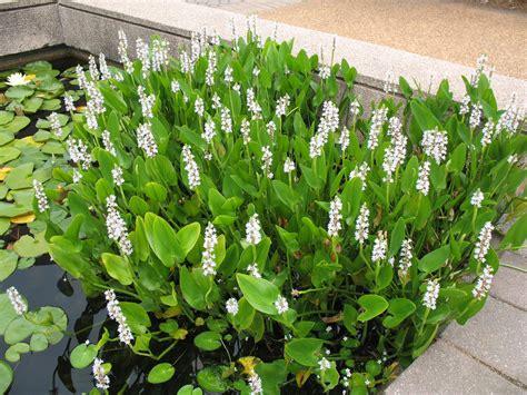 Zuiverende planten