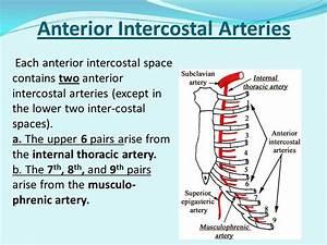 Anterior Intercostal Artery