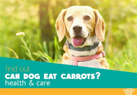 carrots dog eat dogs