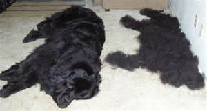 control shedding in dogs i m in review of the new