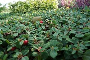 Hang Bepflanzen Bodendecker : pflegeleichte hangbepflanzung f r sonnige standorte hang ~ Lizthompson.info Haus und Dekorationen