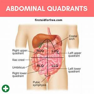 What Are The Four Quadrants Of The Abdomen