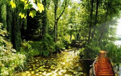 Forest Deep Path 4k Wallpapers Desktop