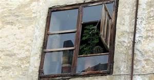 Bäume Für Balkon : wildfind insektenabweisende pflanzen fuer garten balkon ~ Michelbontemps.com Haus und Dekorationen