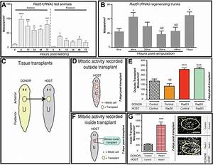 Regional Signals In The Planarian Body Guide Stem Cell