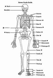 Bones Study Guide