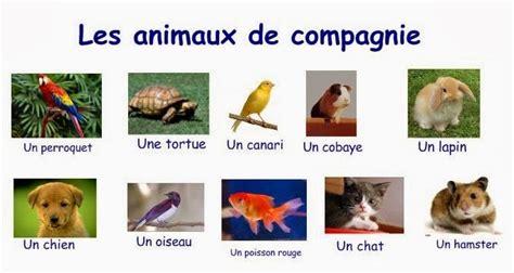 pat les animaux de compagnie dv fran 231 ais animaux de compagnie