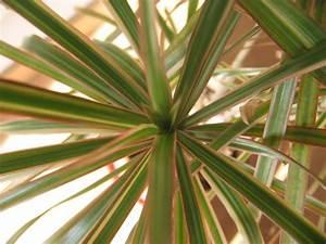 Plantes Grasses Intérieur : l 39 entretien des plantes grasses d 39 int rieur marie claire ~ Melissatoandfro.com Idées de Décoration