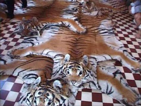 tapis en peau de tigre le tapis en peau de tigre la sardine 224 lire