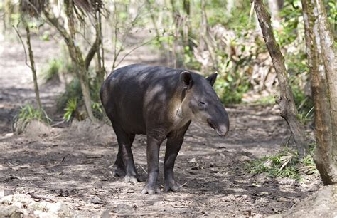 megafauna lifegate