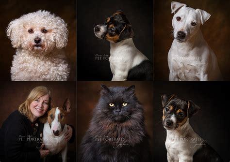 fine art pet portrait sessions jules photography